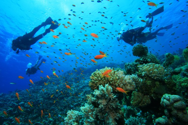 A Quick Primer To The Amazing World Of Scuba Diving